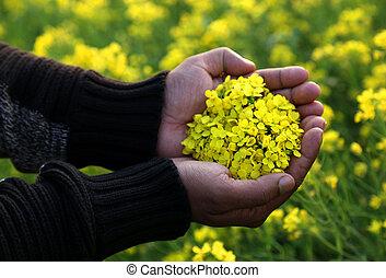 Hand holding mustard flower