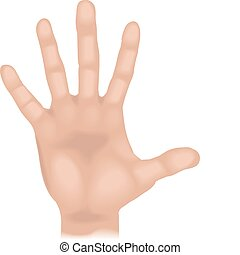 An illustration of a human hand, no meshes used