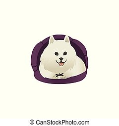 Happy smiling white fluffy dog lying in dog bed and showing tongue .