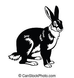 european hare black and white image