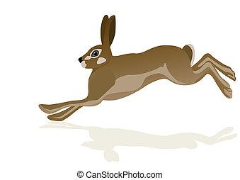 Running hare. The illustration on white background.