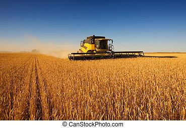 A modern combine harvester working a wheat field