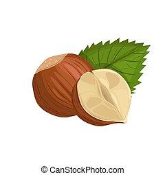 Hazelnut with leaf on white background. Nut in cartoon style.