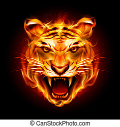 Head of a tiger in tongues of flame. Illustration on black