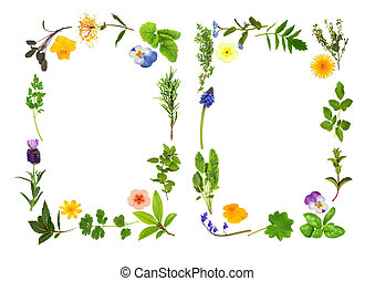 Herb leaf and flower selection forming two abstract borders, over white background.