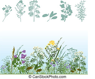 Silhouettes of herbs