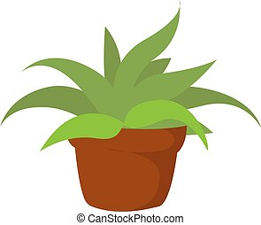 Home plant, illustration, vector on white background.