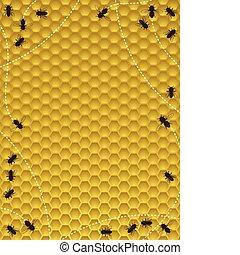 Honey bee border