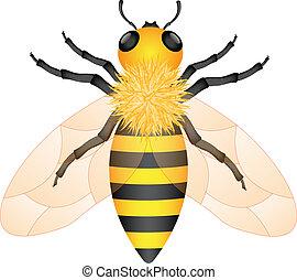Illustration of honey bee isolated on white background