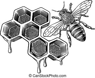 Honey Bumble Bee and Honeycomb Vintage Drawing