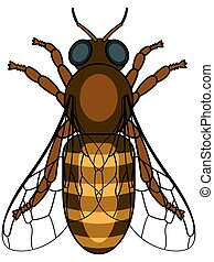 Illustration of the honeybee insect icon
