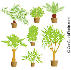 House plants vector background
