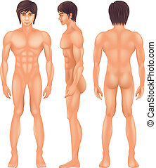 Illustration showing the human body