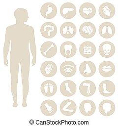 human body parts anatomy, vector medical organs icon,