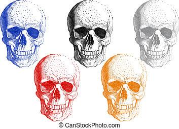 Human skulls, vector set