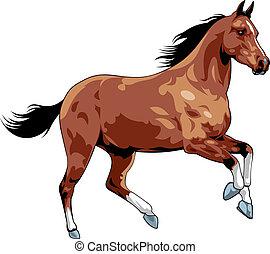 illustrated nice horse isolated on white background