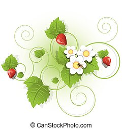 Illustration, berries and sheet of the strawberry on white background