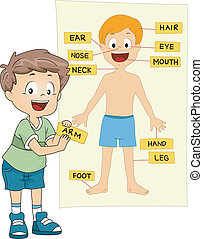 Illustration of a Kid Identifying the Parts of the Body