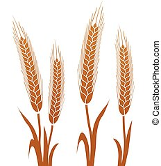 brown wheat on white background