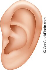 Vector illustration of ear human isolated on white background