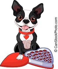 Valentine day Boston terrier
