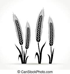 wheat design on white background