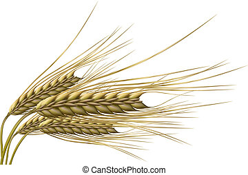 illustration of wheat grain on isolated background