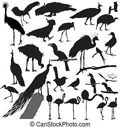 image of bird Silhouette set vector - Illustration