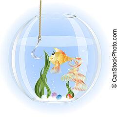 in a glass aquarium goldfish surprise stares at a large fishhook