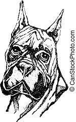 Ink illustration of a boxer dog head