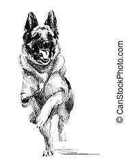 ink portrait of the running german shepherd dog
