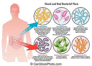 medical illustration of the good and the bad bacterial flora