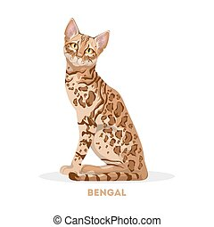 Isolated bengal cat on white background. Domestic animal.