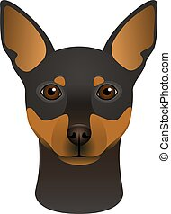 Isolated colorful head and face of miniature pinscher on white background. Color flat cartoon breed dog portrait.