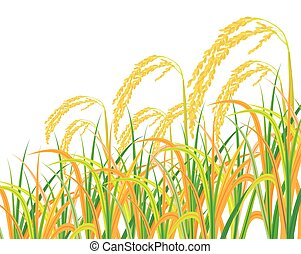 isolated rice plant on white background vector design