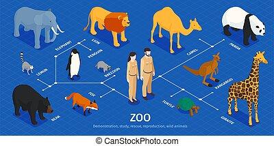 Isometric Zoo Animals Infographics