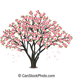 Sakura blossom - Japanese cherry tree, isolated on white background