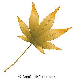 Japanese Maple leave, vector illustration