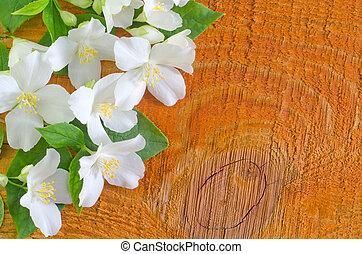 jasmine spring flowers frame on white background
