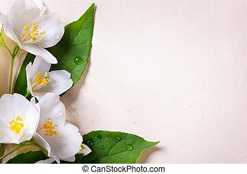 jasmine spring flowers on old paper background