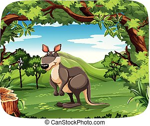 Kangaroo in the forest