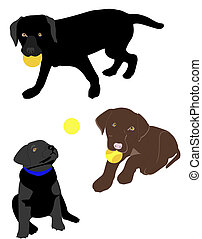 Black and chocolate lab puppies playing like they do.