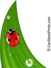 Ladybird On Green Grass, Isolated On White Background, Vector Illustration