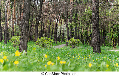 Landscape in a city park in spring, trees, green grass with bright yellow dandelions