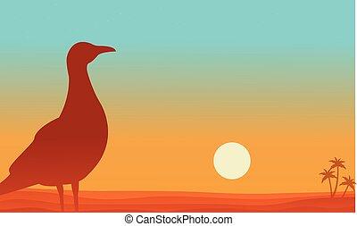 Landscape of bird in beach silhouettes