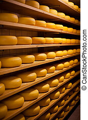Large number of cheese-wheels aging