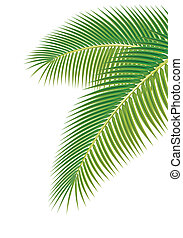 Leaves of palm tree on white background. Vector illustration.