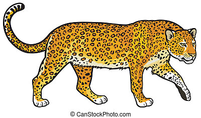 leopard, panthera pardus, side view illustration isolated on white background