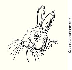 line drawing of the head of the rabbit