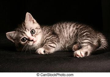 little cute cat